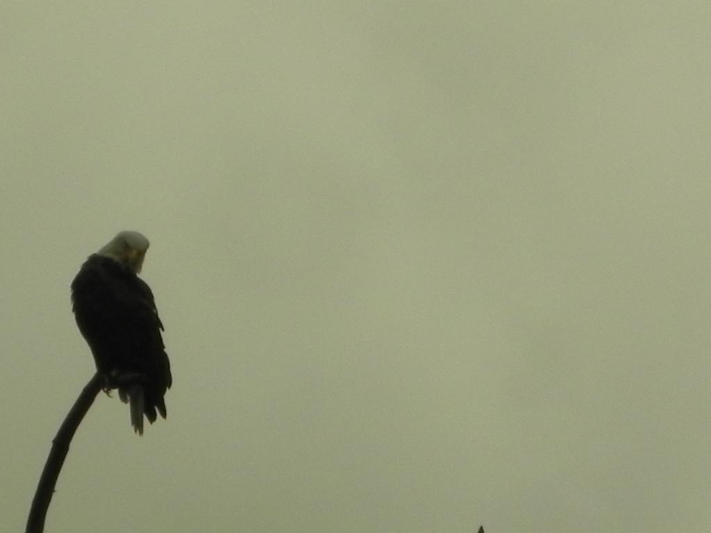 eagleeye2