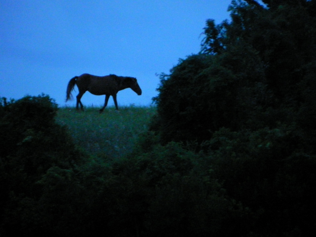 Wild horse on Beaufort Marsh, near Cape Lookout
