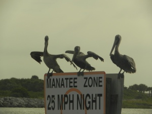 pelican zone, perhaps? (leaving ICW from Daytona, going outside)