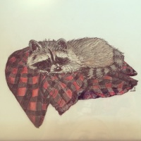 Coon on blanket (colored pencil)