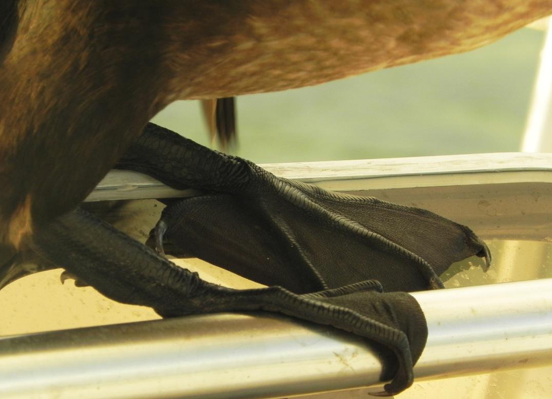feetofabird